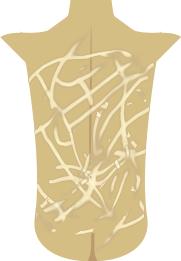 of Draconus' back, drawn by me